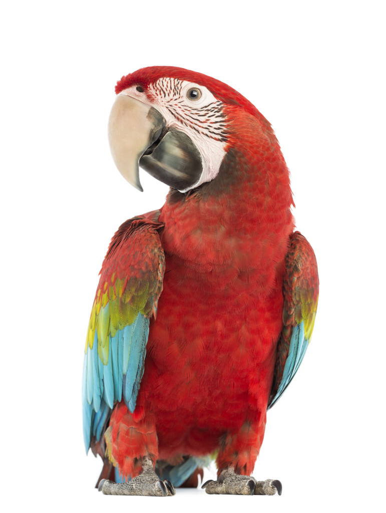 Vetrix® Avian Surgery